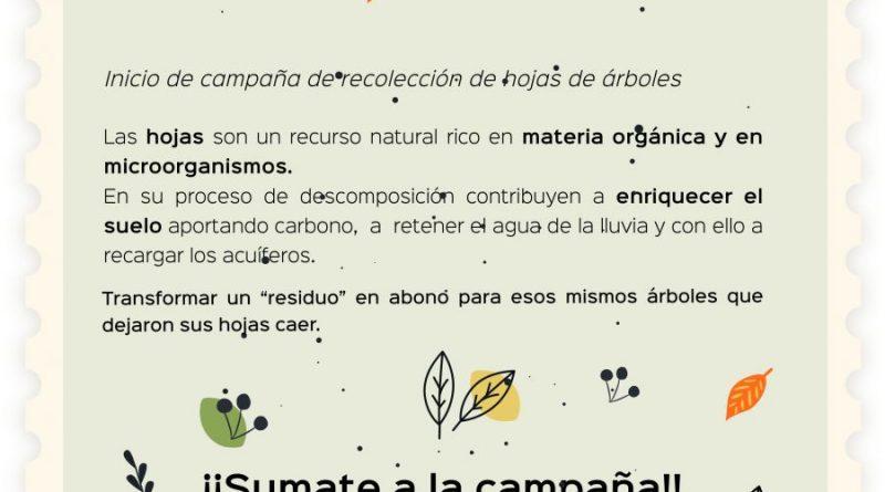 """Acciones Verdes: Inicia la campaña de recolección de hojas de árboles """"Compostando en Otoño"""""""